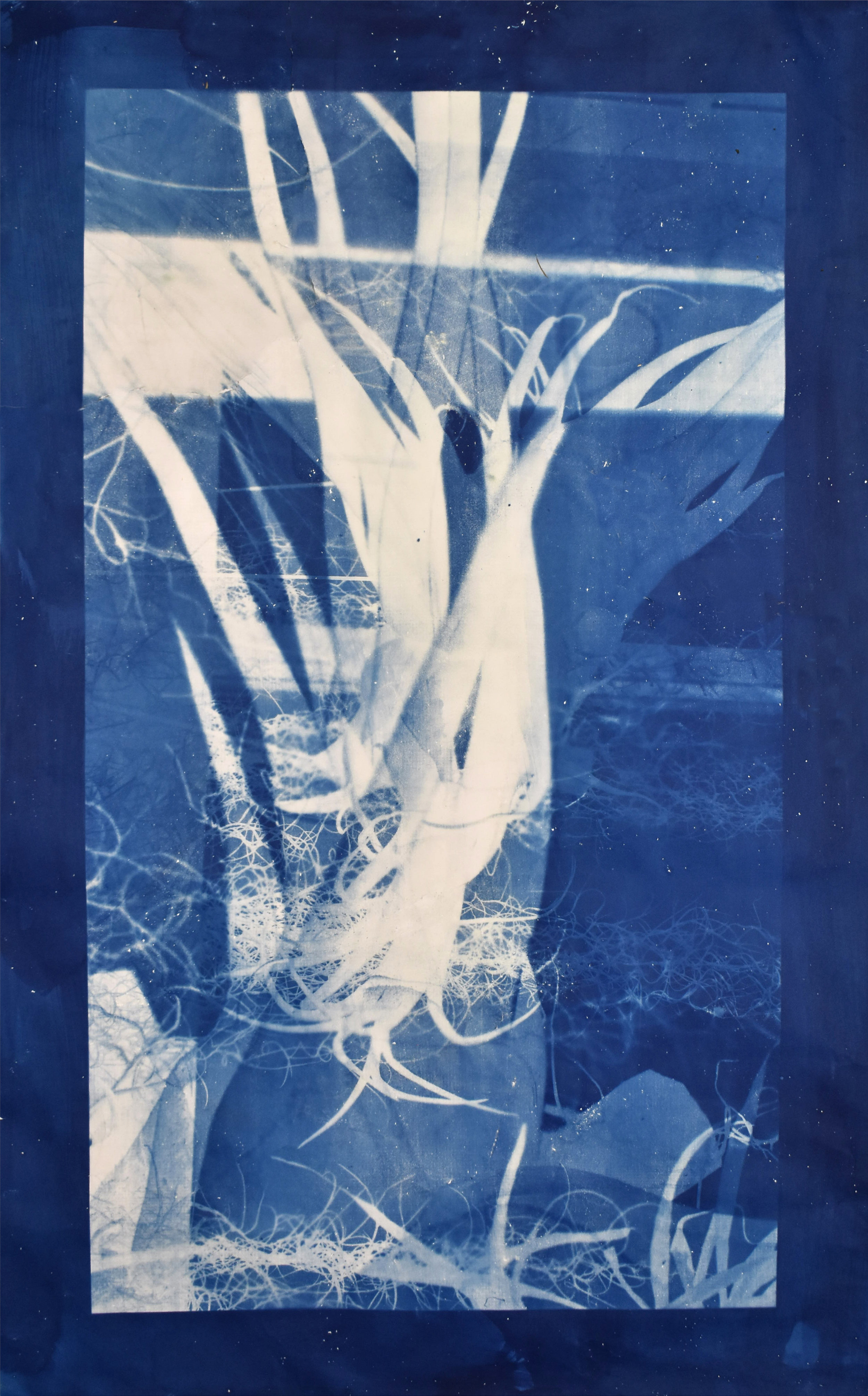 Interlaced (cyan) No. 1  2019, series of 3 cyanotypes. Based on a superposition of macroscopic photographs taken of orchids, greenhouses of Versailles-Chèvreloup, France. 70cm x 150cm each.