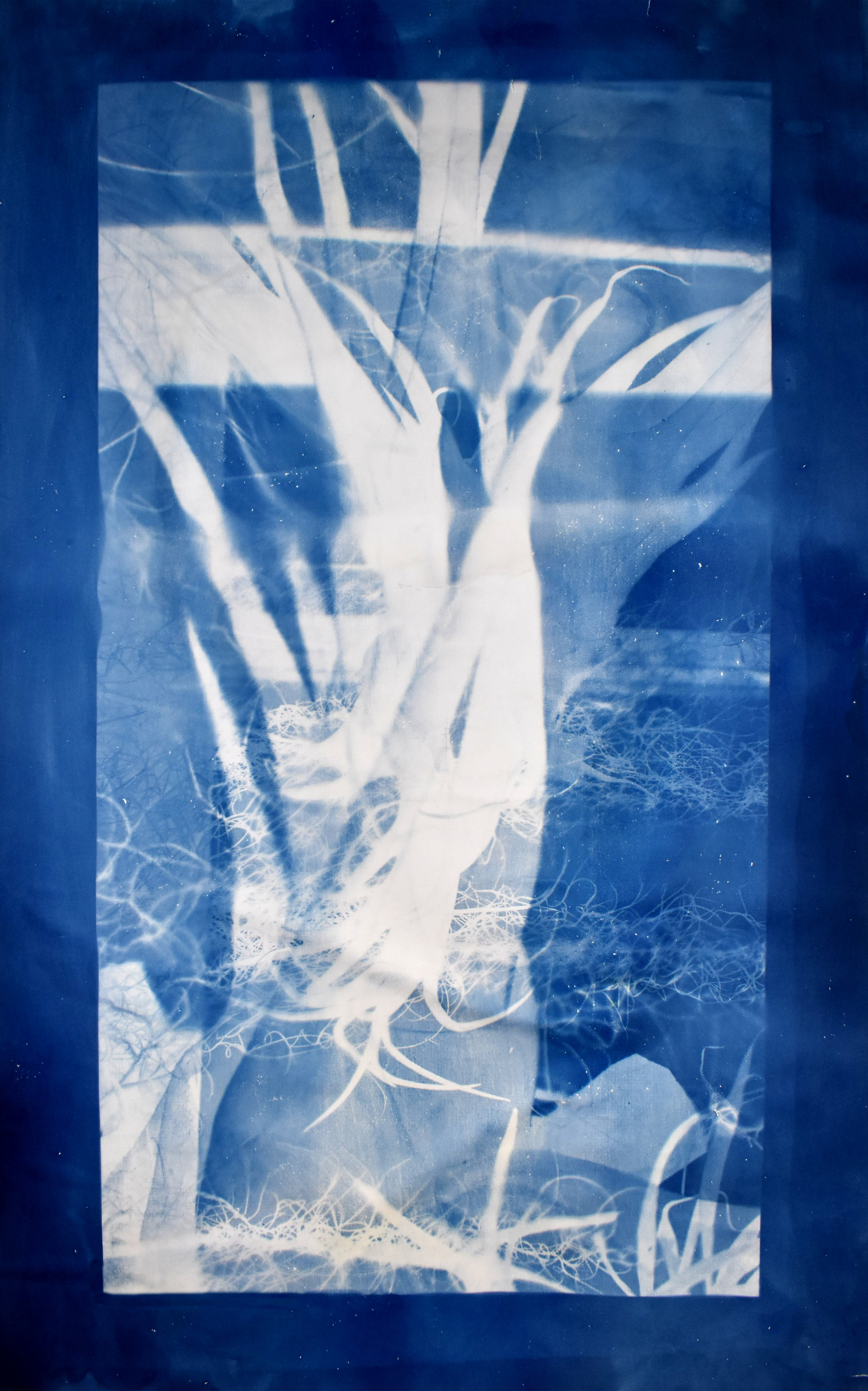 Interlaced (cyan) No. 2,  2019, series of 3 cyanotypes. Based on a superposition of macroscopic photographs taken of orchids, greenhouses of Versailles-Chèvreloup, France. 70cm x 150cm each.