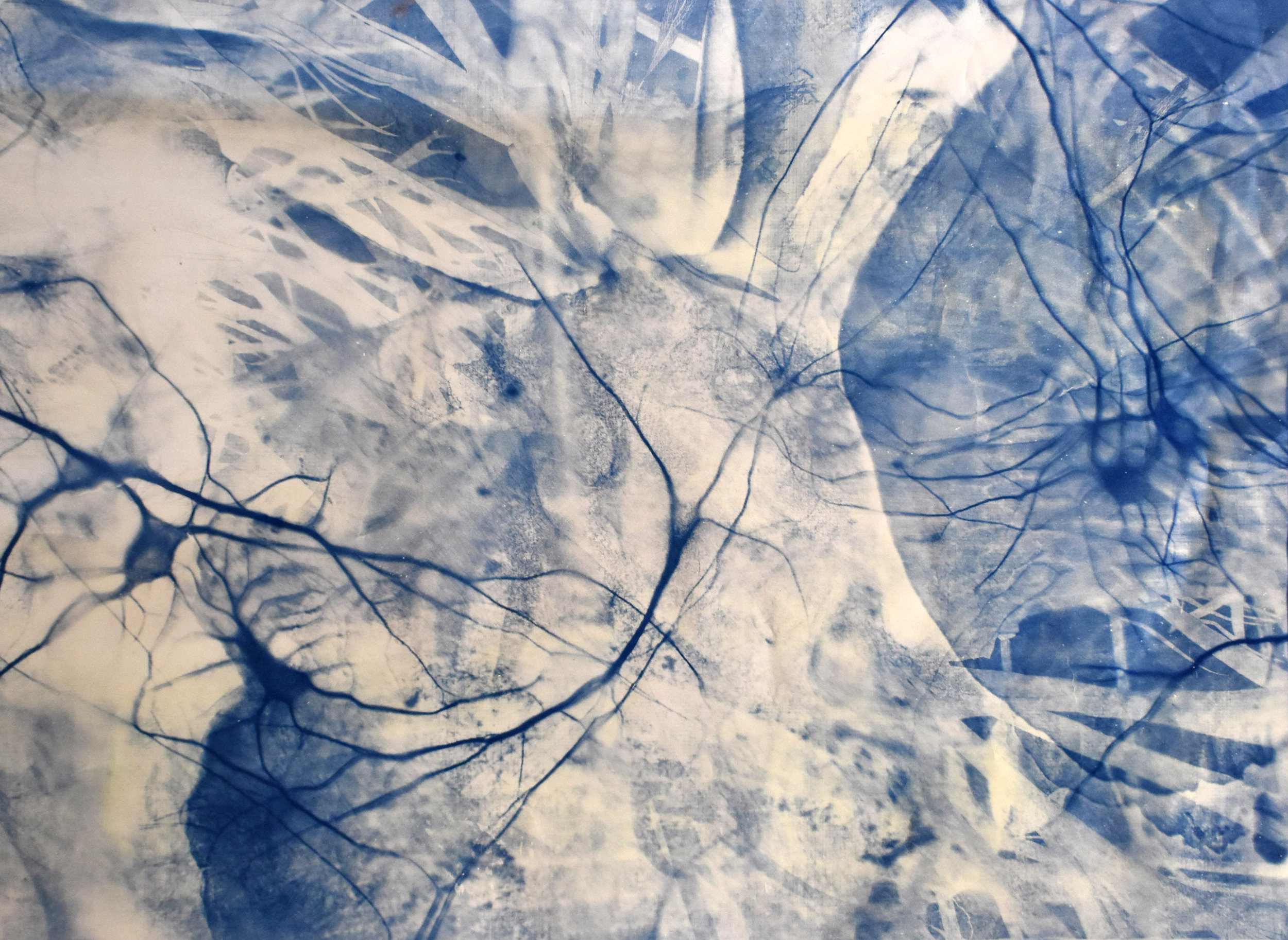 Currents, No. 2,  2019. Series of 2 cyanotypes. 140cm x 100cm each. Superposition of several macroscopic images of platycerium taken by the artist (greenhouses of Versailles-Chèvreloup) and microscopic image of rat neurons taken by Maria Pinto, PhD (Institut de Biologie, Ecole normale supérieure, Paris, France).