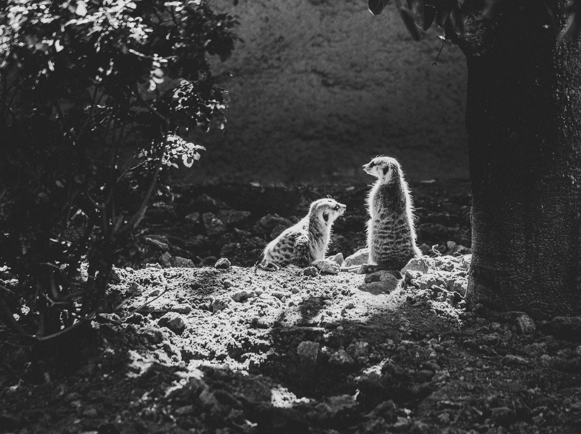 SD Zoo 003.jpg