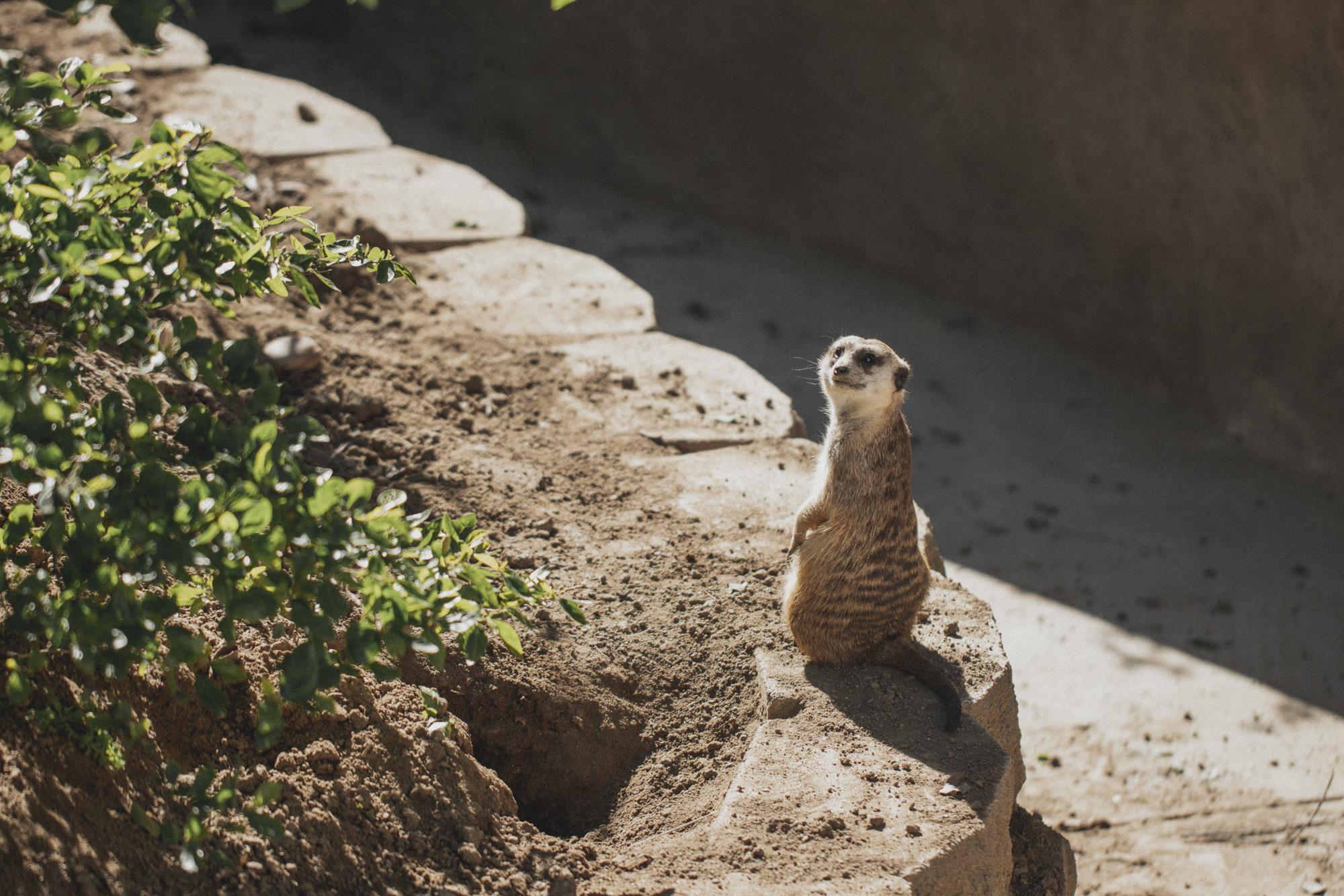 SD Zoo 005.jpg