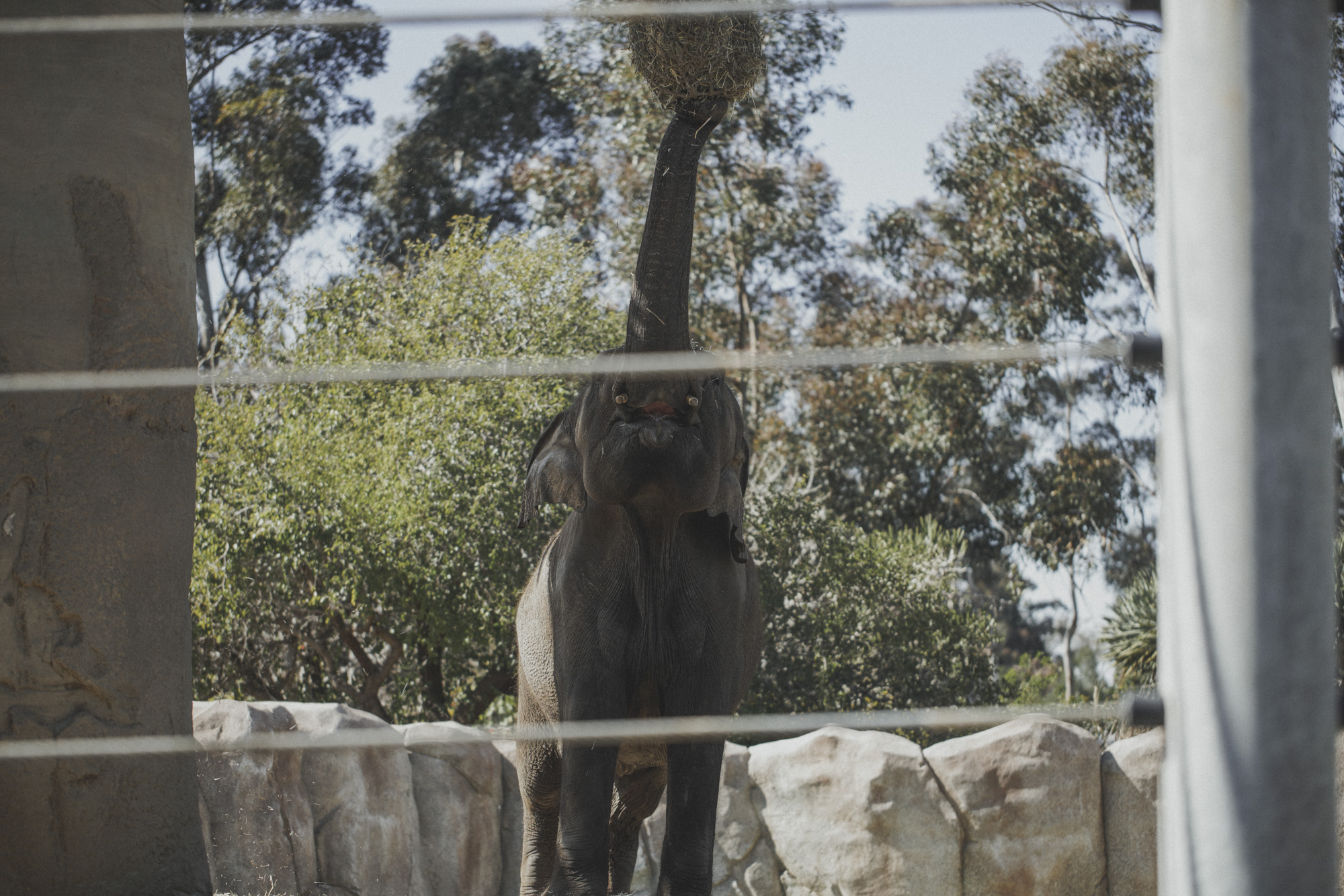 SD Zoo 008.jpg
