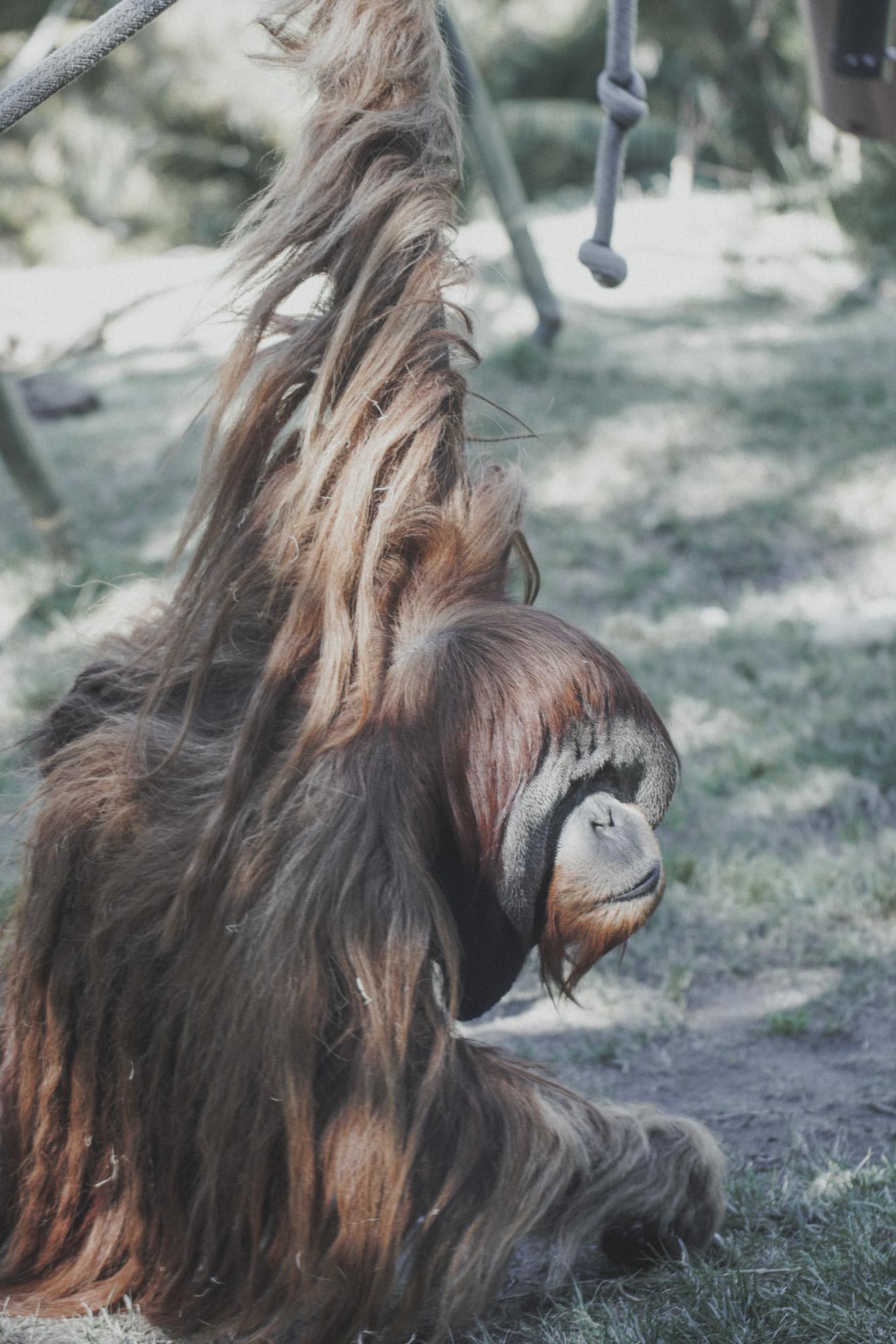 SD Zoo 016.jpg