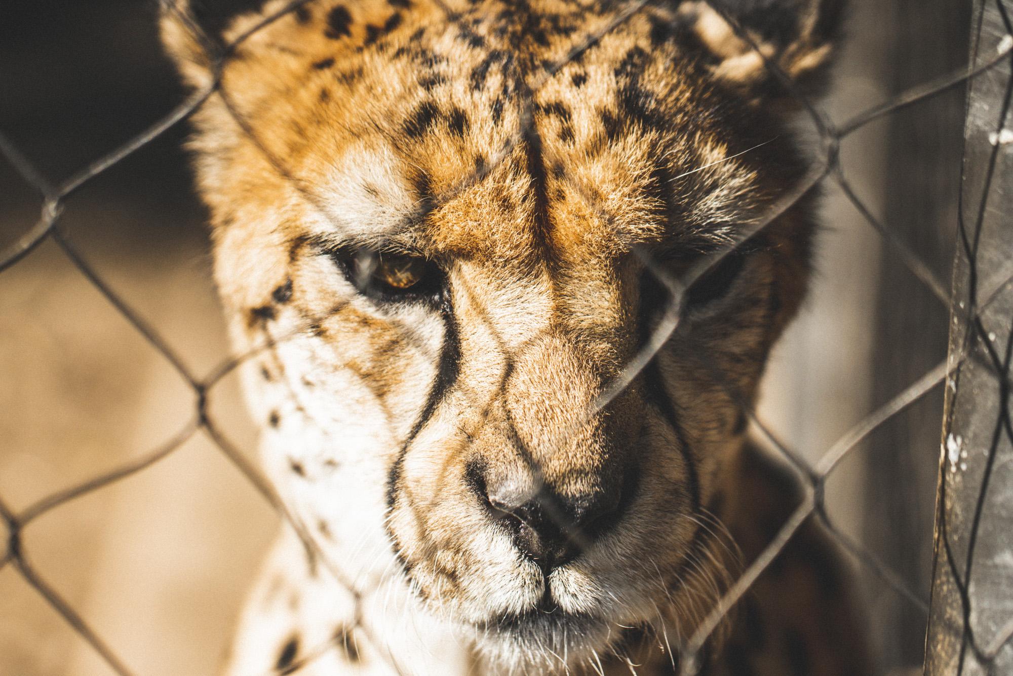 SD Zoo 020.jpg