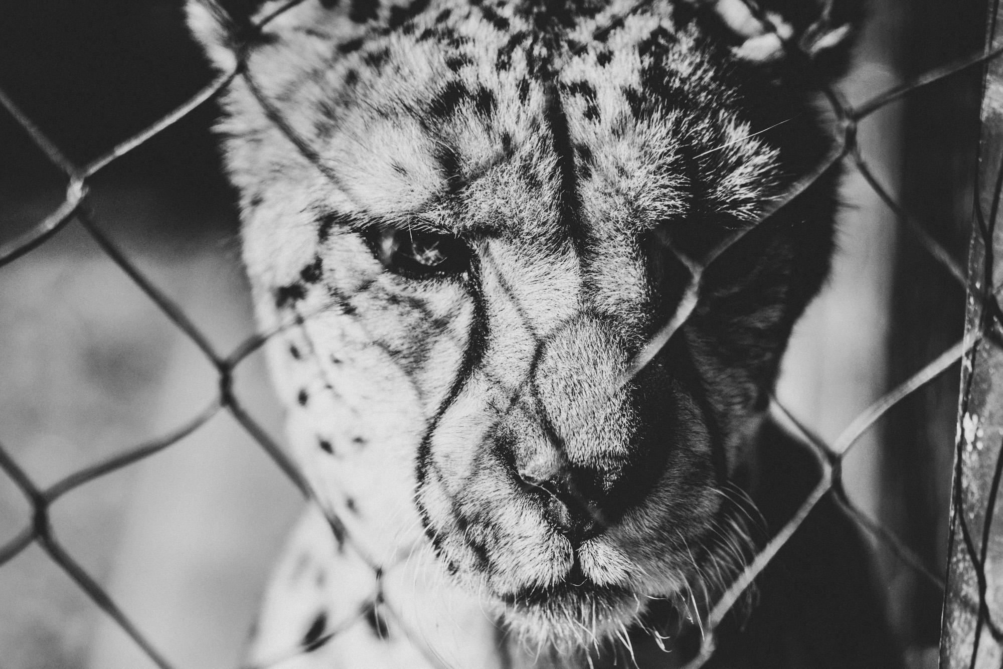 SD Zoo 021.jpg