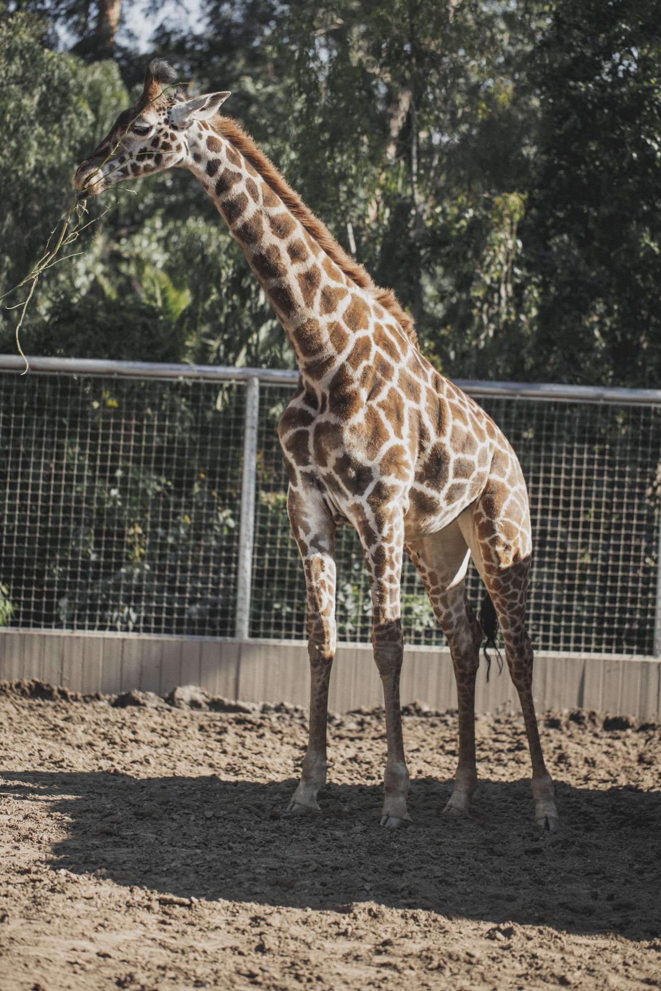 SD Zoo 026.jpg