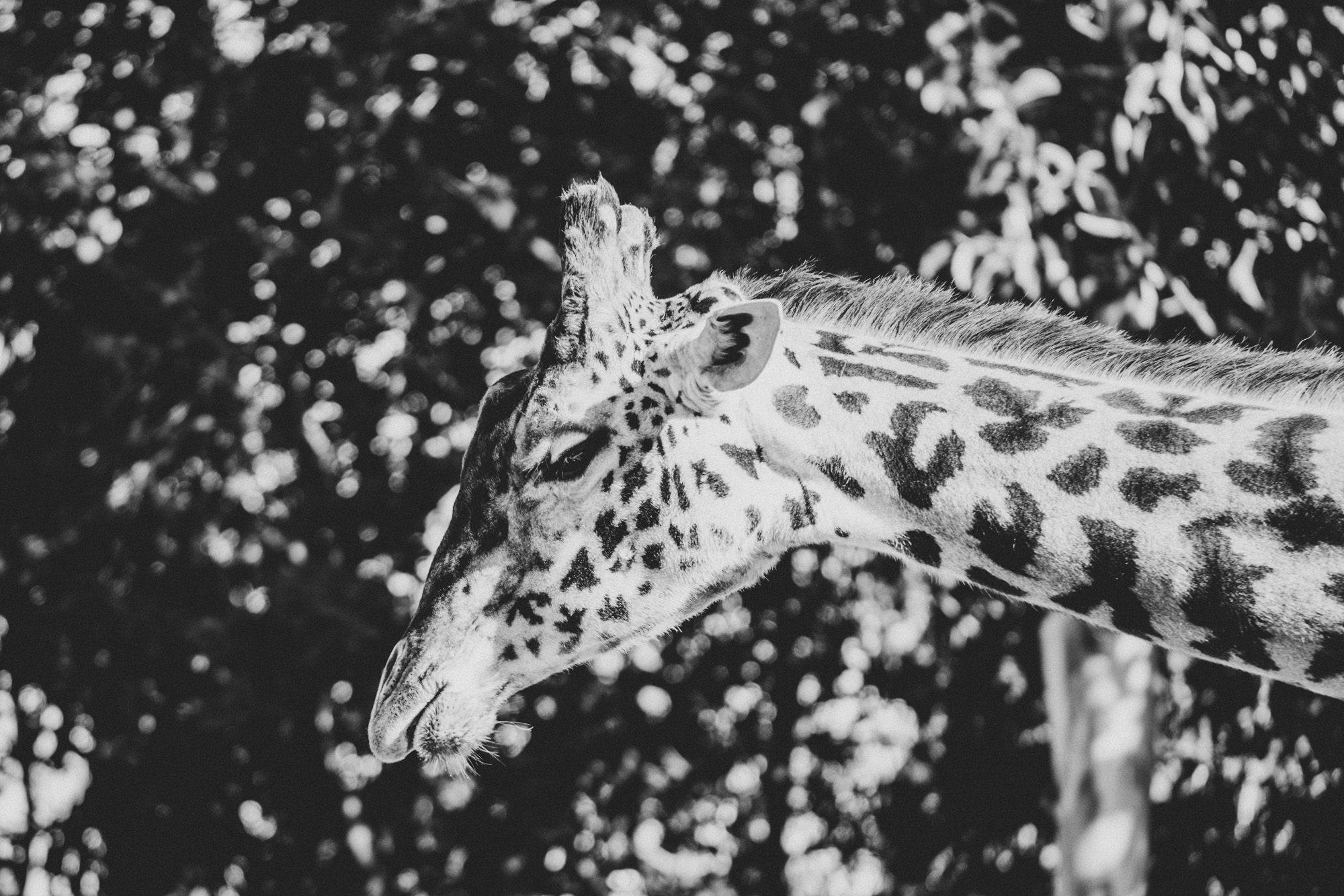SD Zoo 028.jpg