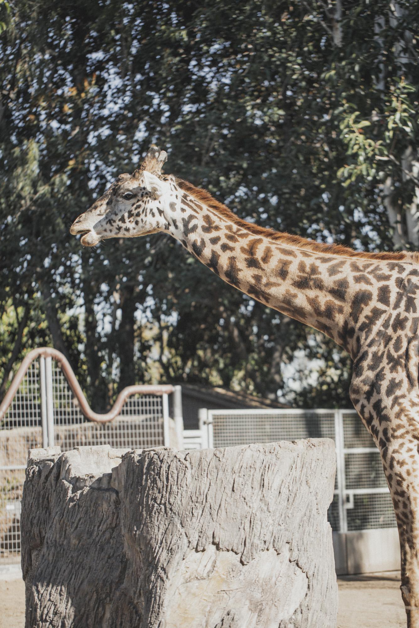 SD Zoo 027.jpg