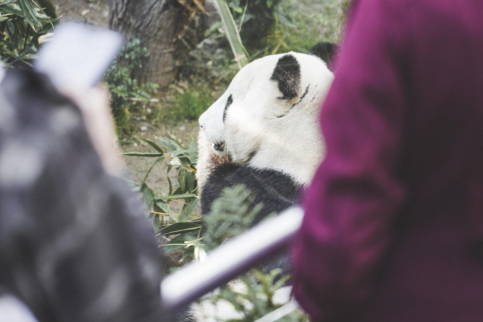 SD Zoo 032.jpg