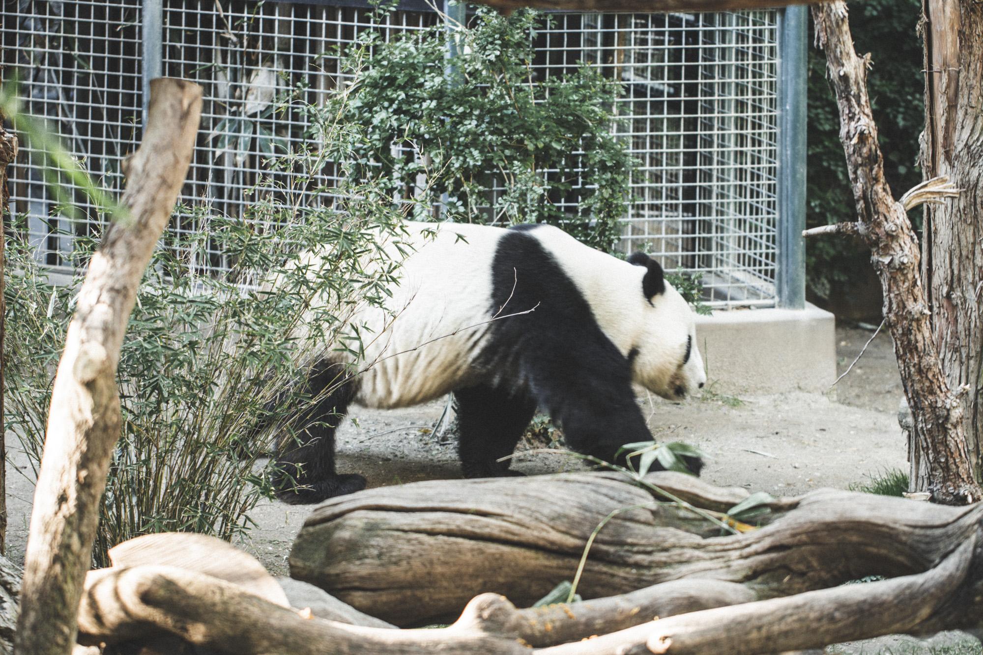 SD Zoo 031.jpg