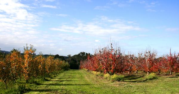 orchard_small.jpg