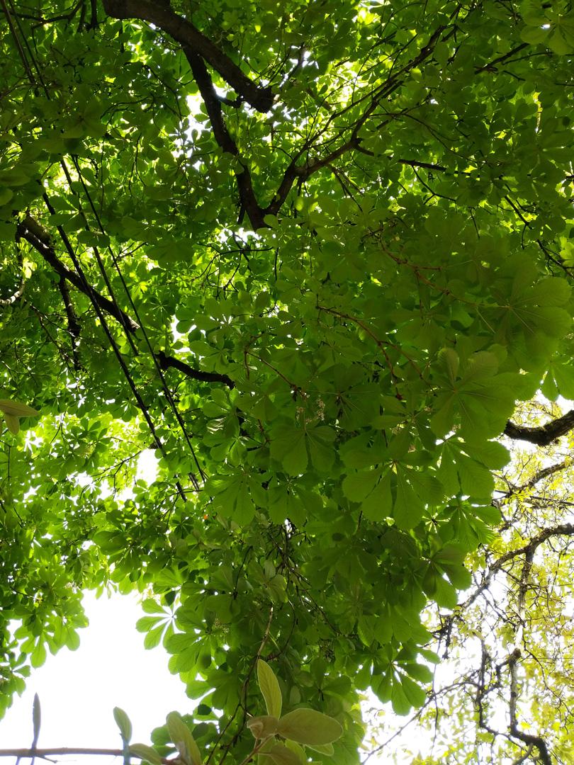 portland-tree.jpg
