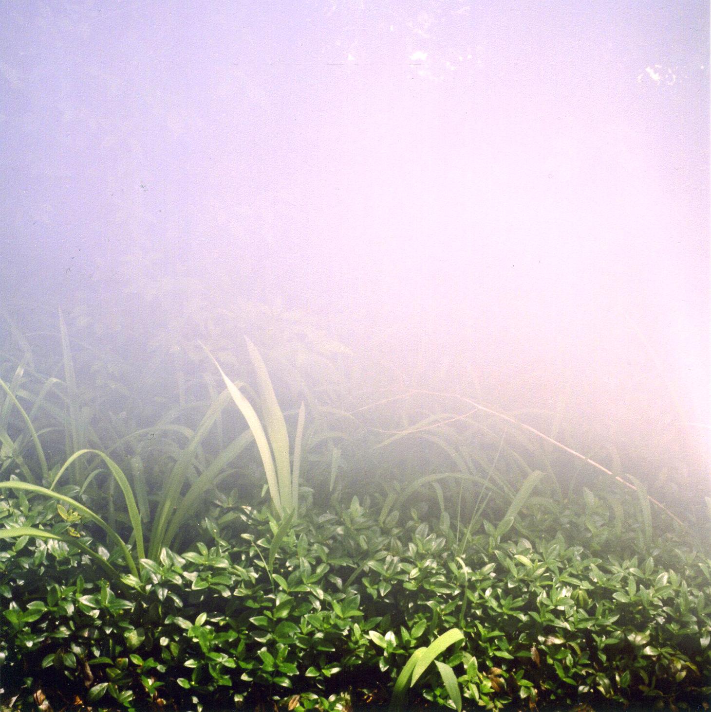 Cloud Grass (Good People, Bad Behavior)