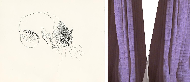 Kitten Curtain