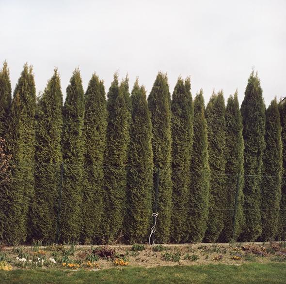 Hedge Lines II