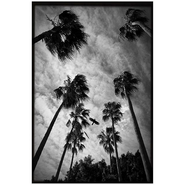 Moore Park - 2018. I must say I've always had a thing for palm trees and in  photos I reckon they're just instant mood makers.