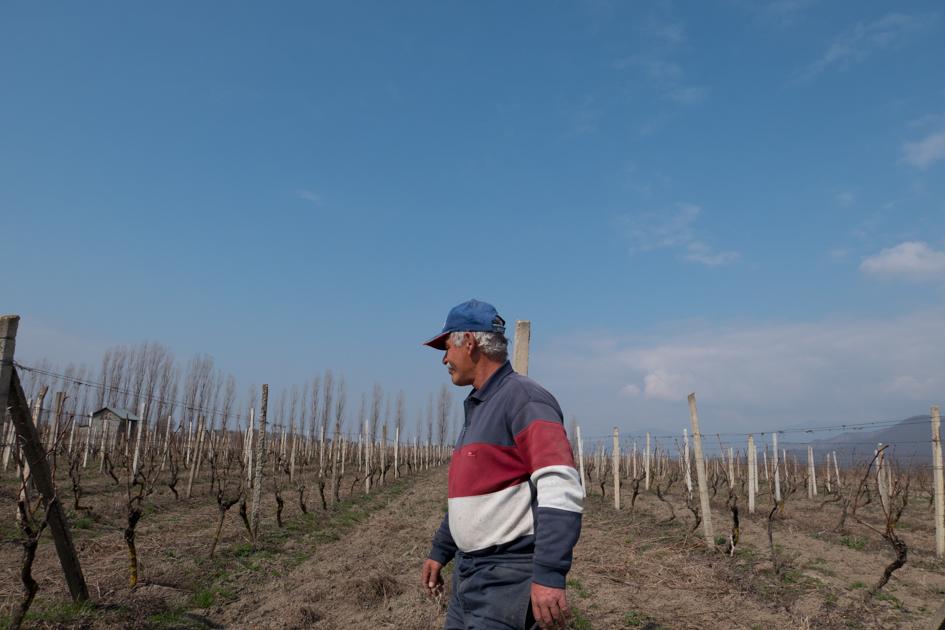 Nugzar in the family vineyard.