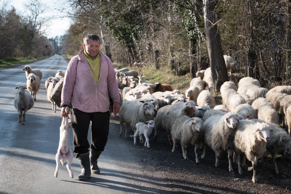 Shepherd with a new-born lamb.