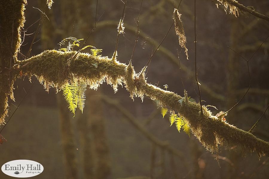 Willamette Valley Proposal Photographer - Silver Falls-11.jpg