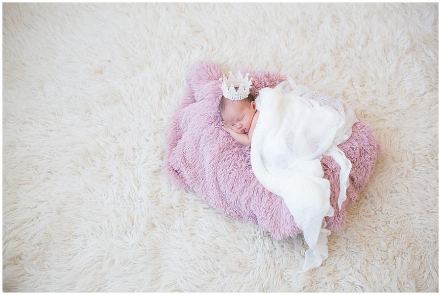 Albany  Newborn Photographer-16.jpg