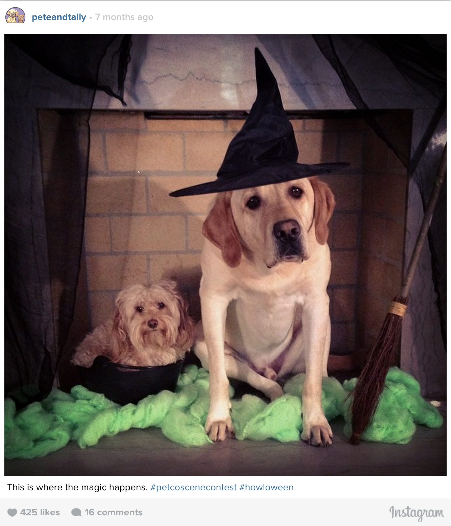 ptcomps_halloween_witches.jpg