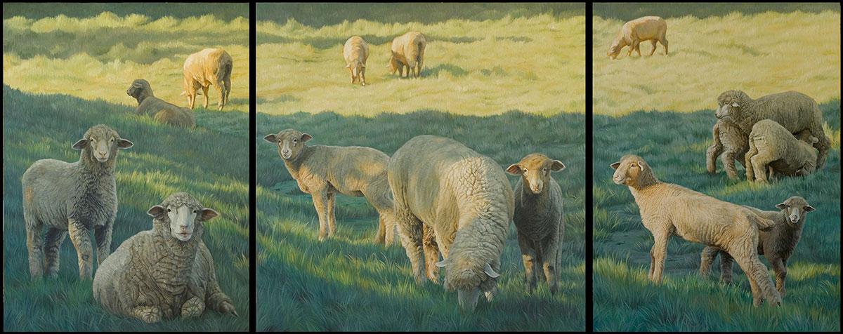 Sheep Triptych