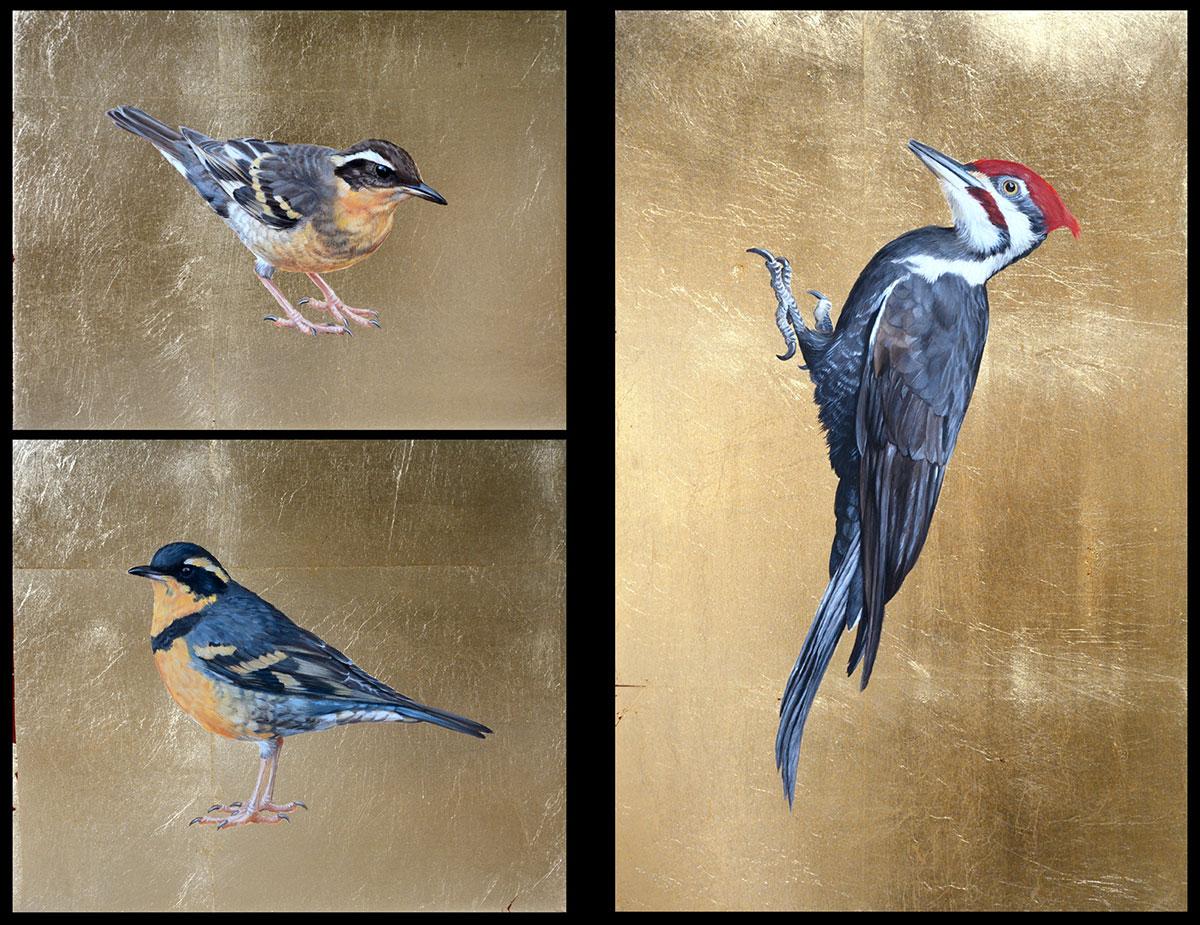 Varied Thrush(male & female), Pileated Woodpecker