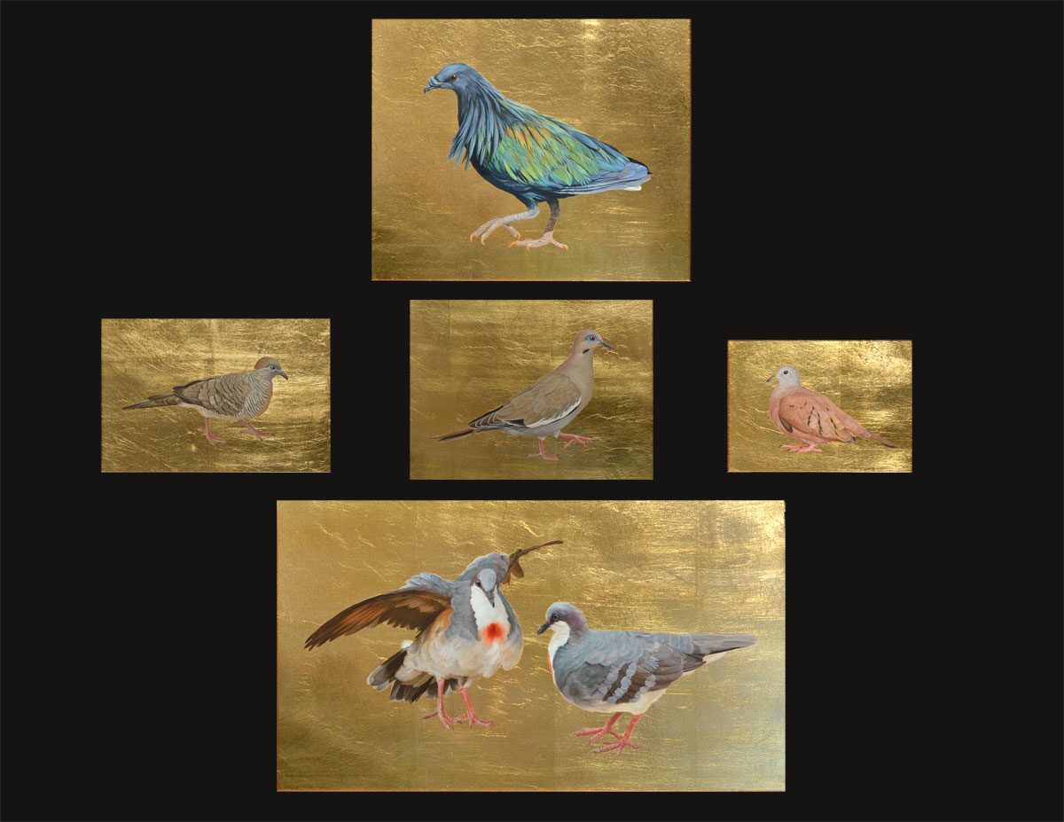 from top to bottom: Nicobar Pigeon, Zebra Dove, White winged Dove, Ruddy Ground Dove, Luzon Bleeding-Heart Doves
