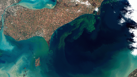 This image, taken from space, shows the algal bloom that rendered Toledo, Ohio's water undrinkable for two days in August 2014. This is the largest algal bloom ever recorded on Lake Erie. Photo from NAS