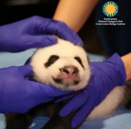 Photo:  Smithsonian Zoo Instagram