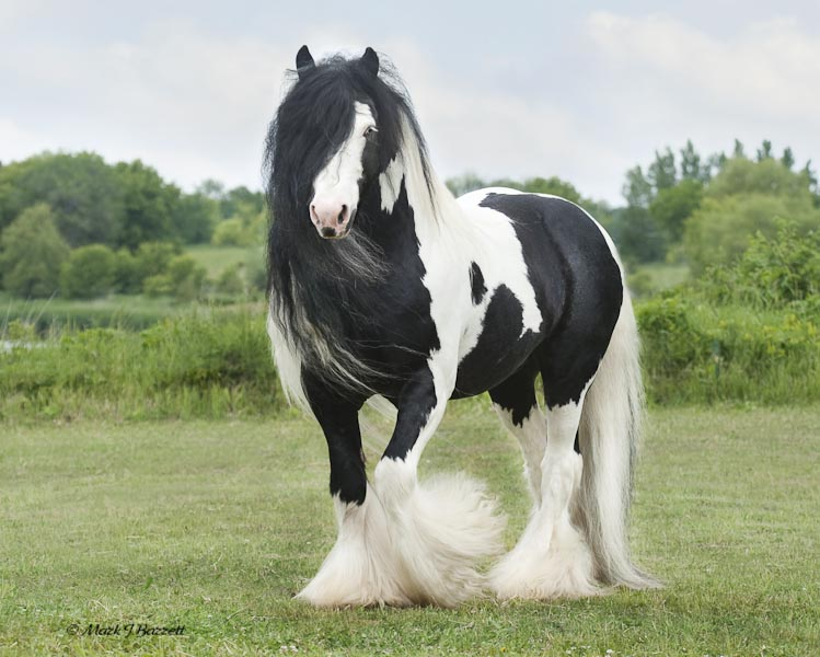The 10 Most Beautiful Horse Breeds in the World! — I Love Nature
