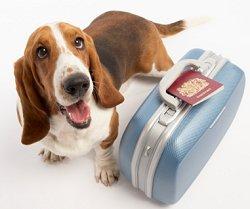 neutering-suitcase.jpg