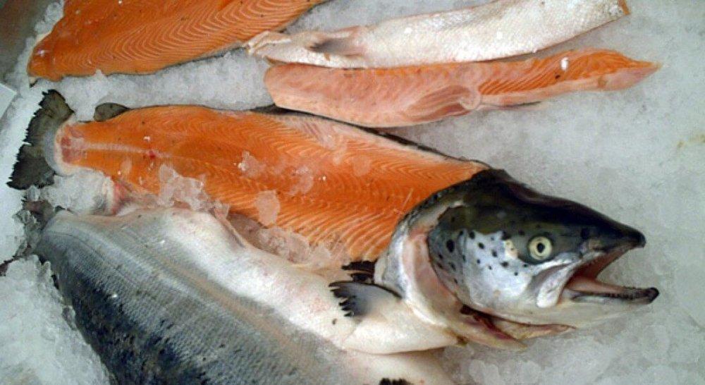 salmon600.jpg
