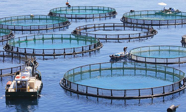 aquaculture-open-water-net-pens-750.jpg