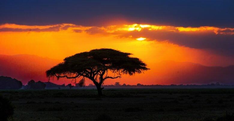 African-Savannah-780x405.jpg