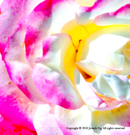 For inquiries regarding Fine Art print sales, please  contact me  or visit  my store in Etsy .  © Joseph Ng. All rights reserved.