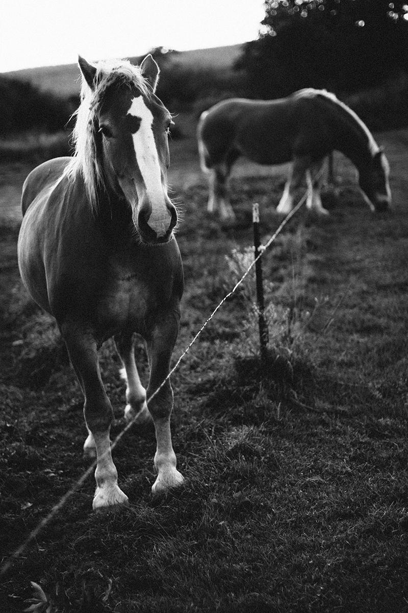 D300_50_zierdt_lawrenz_horse_neopan400-3770_1200.jpg