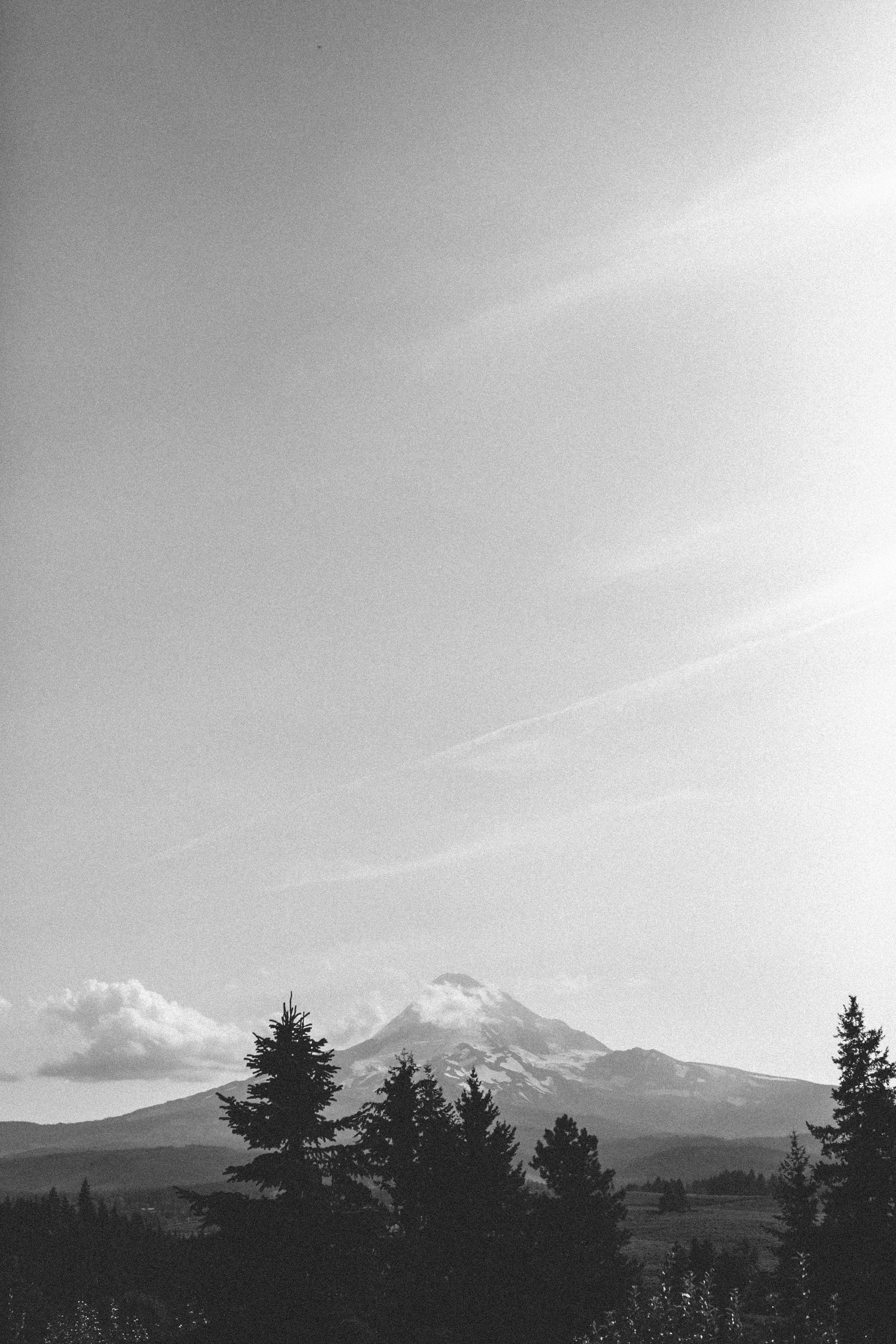 Sarah and Ben- Mt Hood Organic Farms, Portland  Oregon Wedding- Grace and Jaden Photography (434).jpg