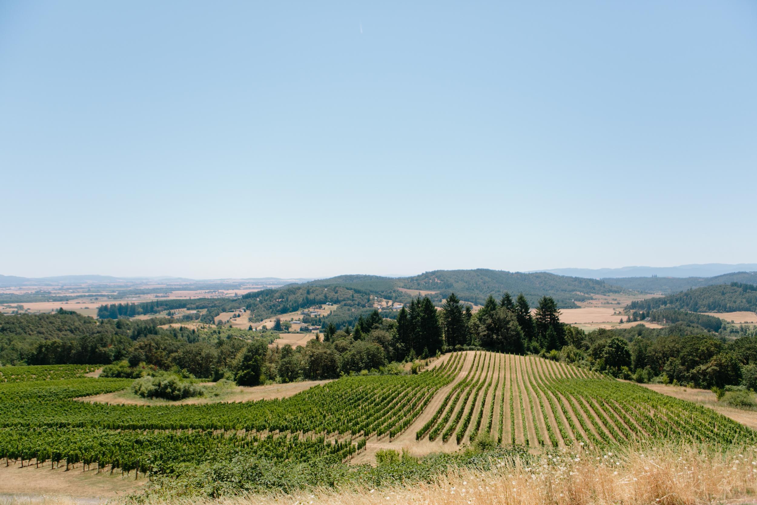 youngberg hill winery, portland Oregon Wedding (4).jpg