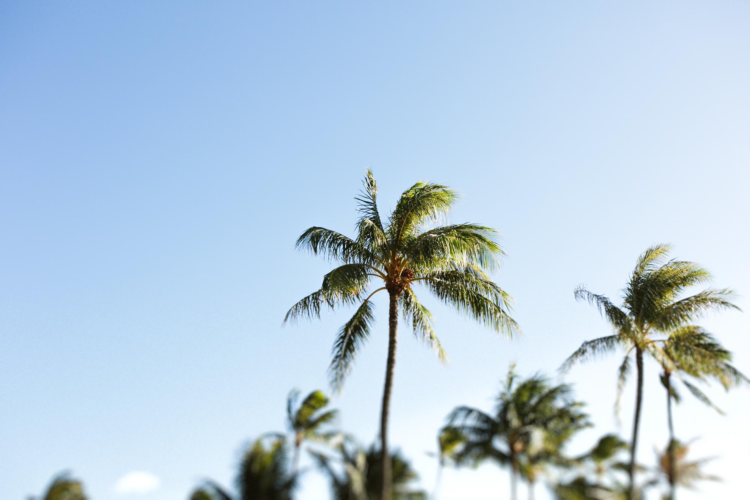The Westin Maui, Hawaii Wedding, Grace and Jaden Photography (12).jpg