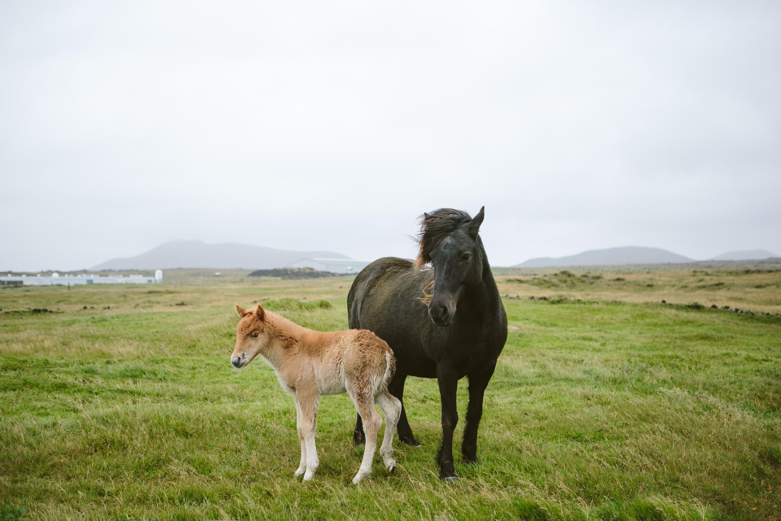 Iceland Outdoor Photographer- Grace and Jaden Photography (25).jpg