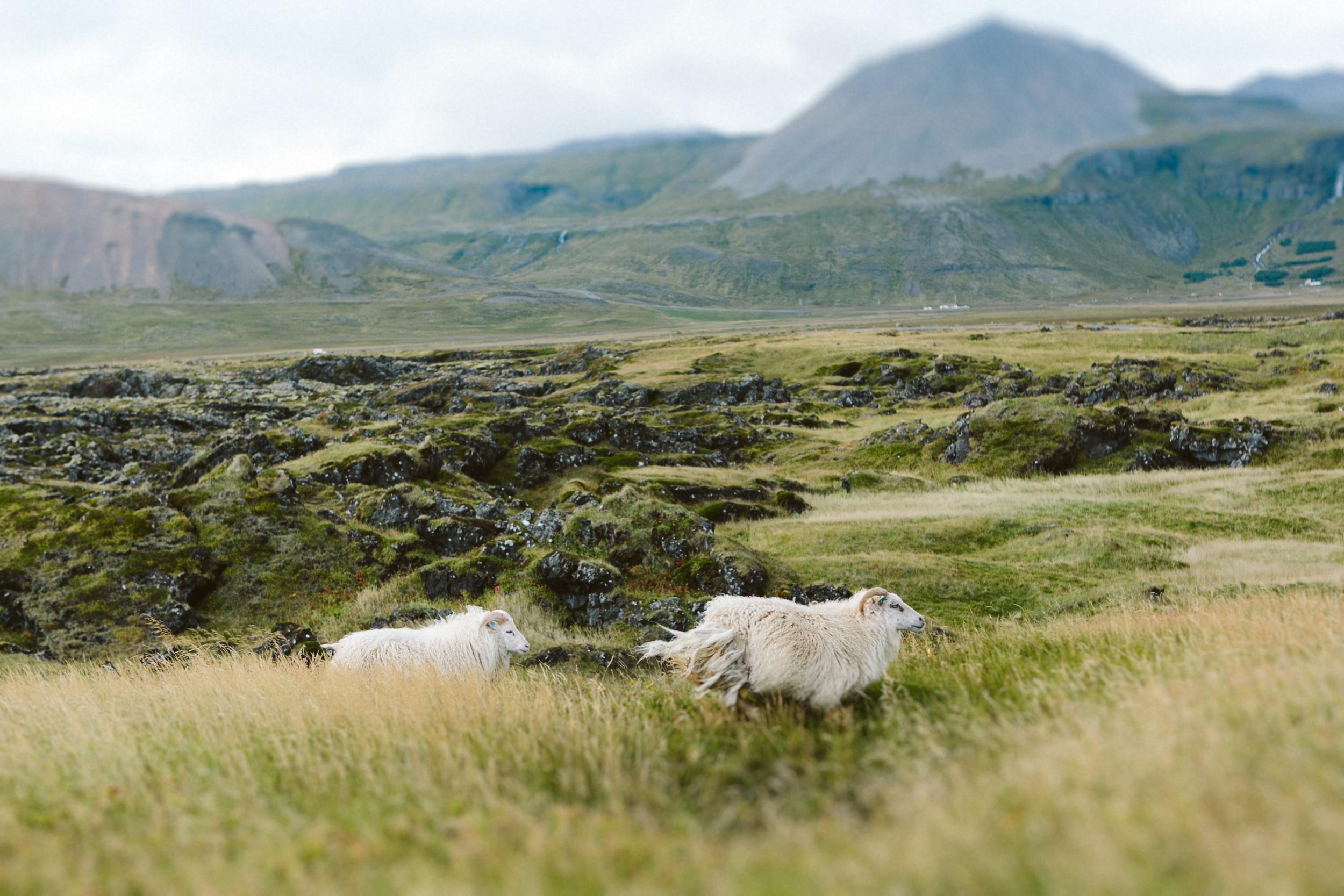 Iceland Outdoor Photographer- Grace and Jaden Photography (166).jpg