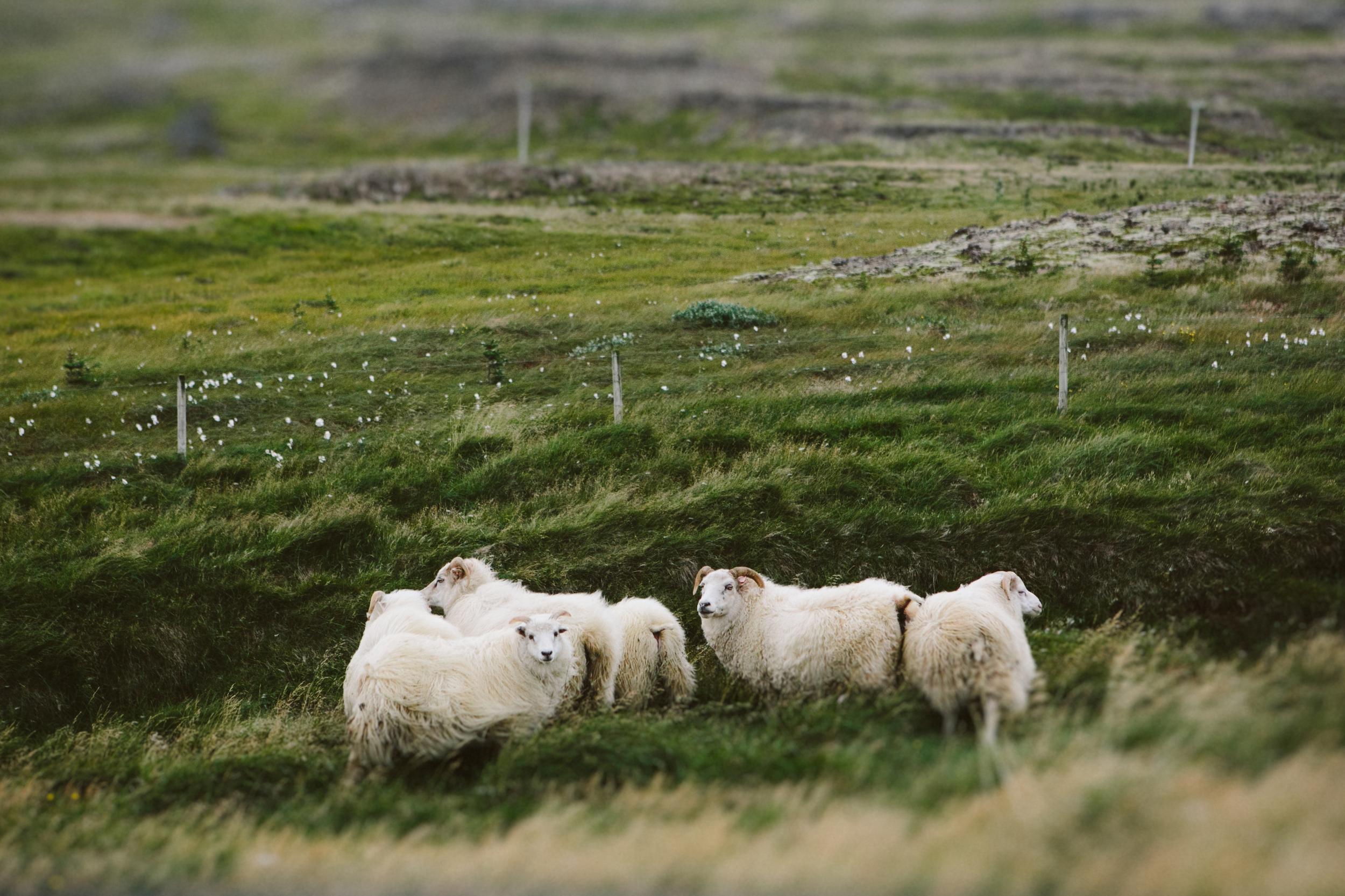 Iceland Outdoor Photographer- Grace and Jaden Photography (156).jpg