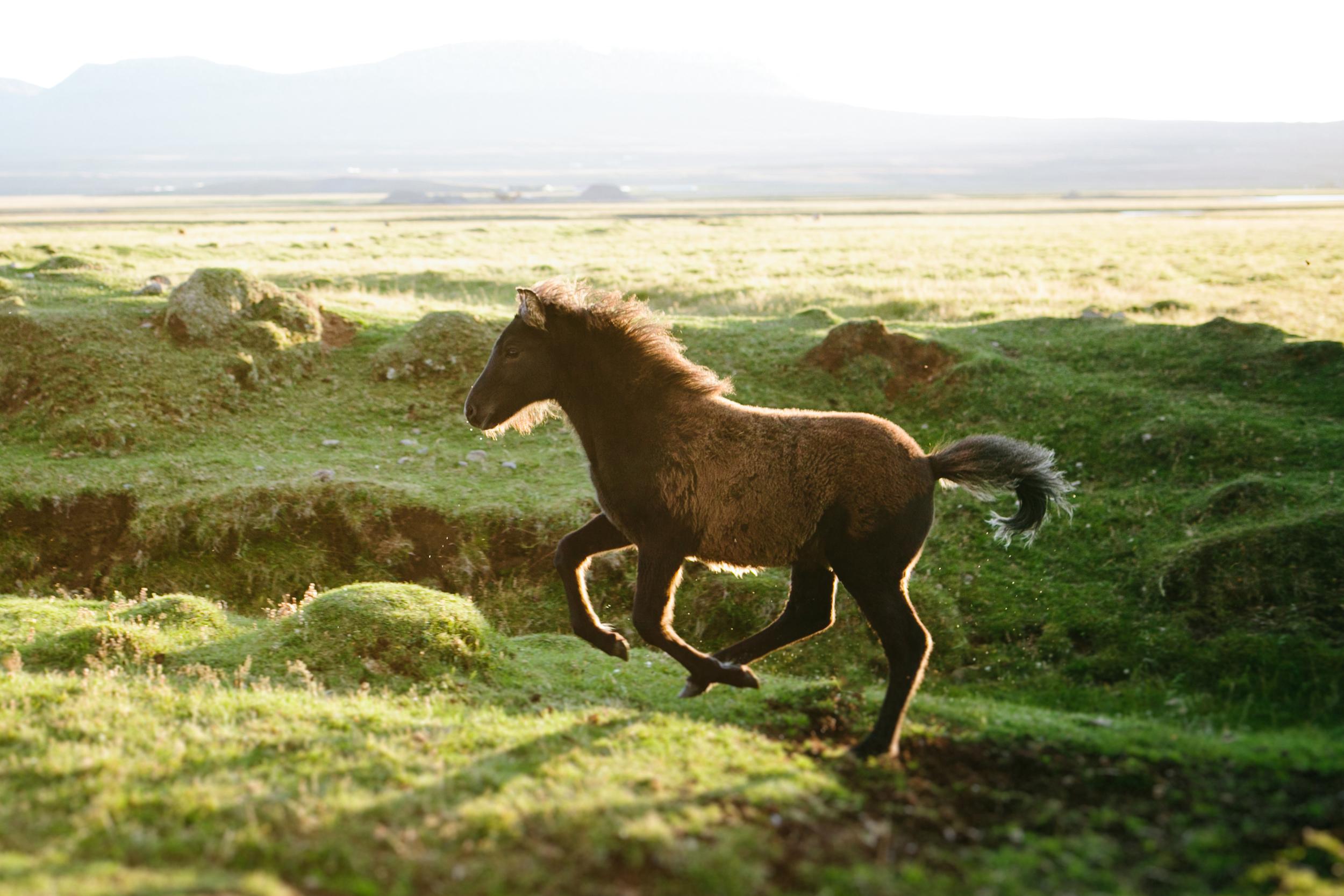 Iceland Outdoor Photographer- Grace and Jaden Photography (153).jpg