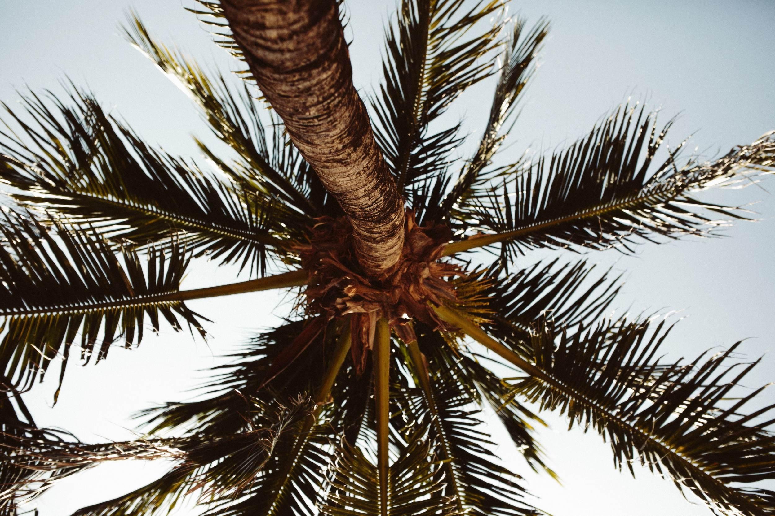 Roatan Honduras- Grace and Jaden Photography (17).jpg