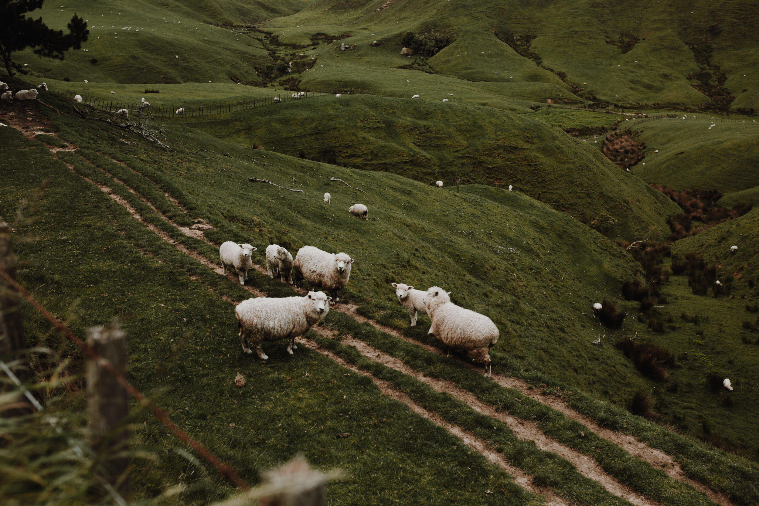 New Zealand- Grace and Jaden Photography (38).jpg
