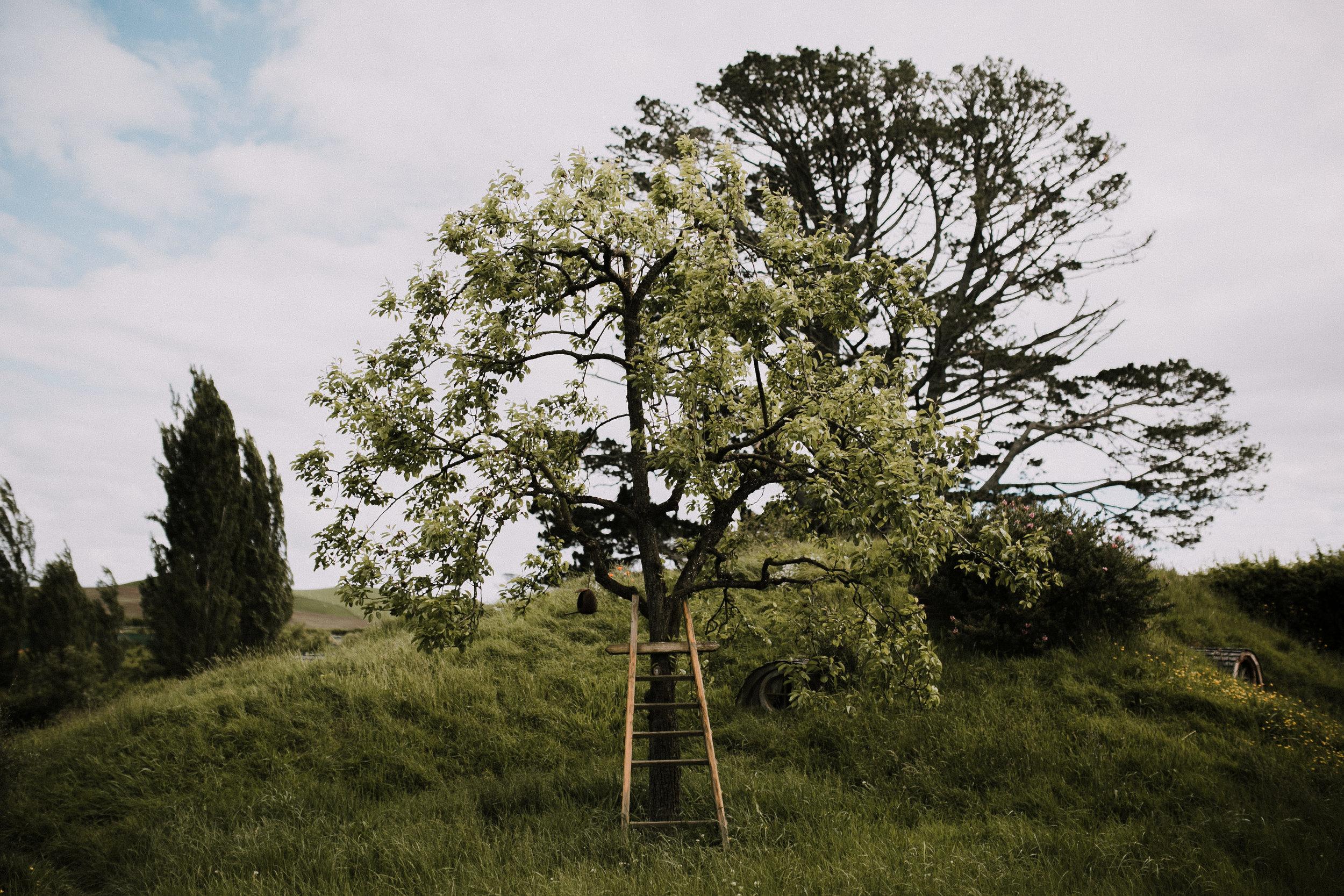 New Zealand- Grace and Jaden Photography (63).jpg