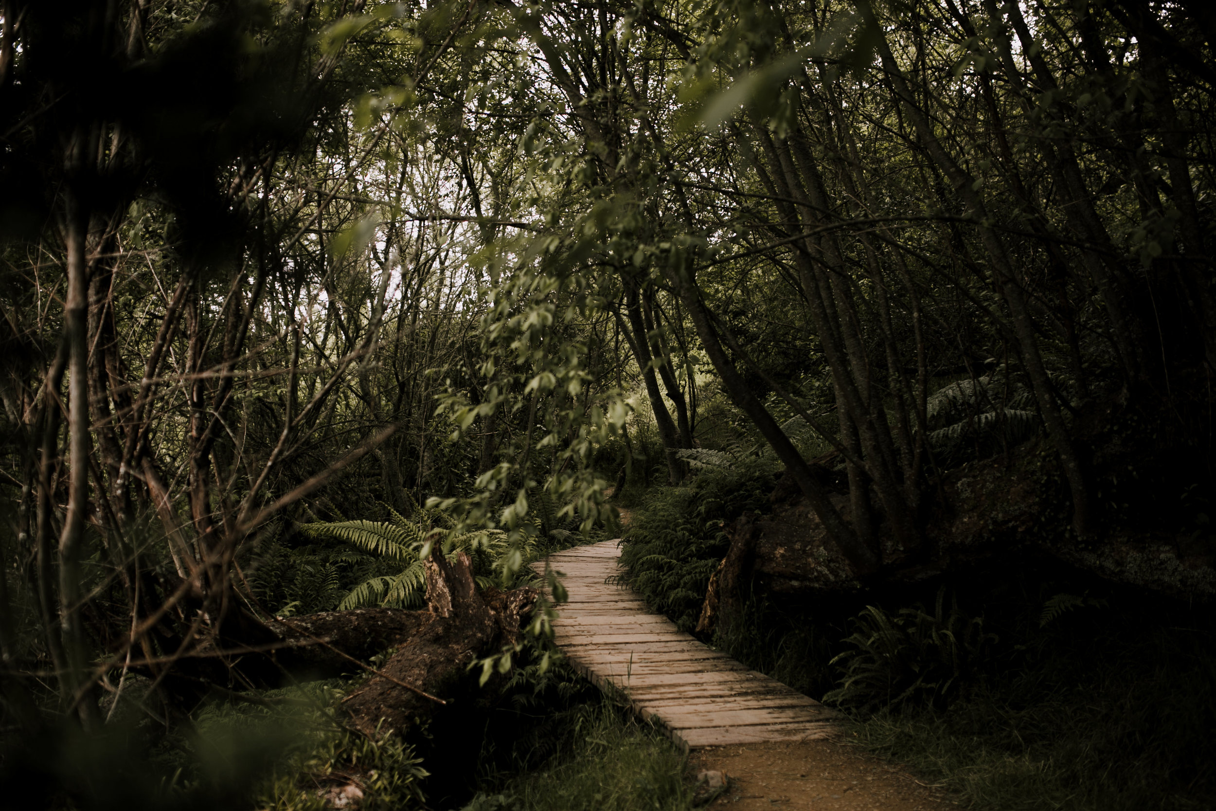 New Zealand- Grace and Jaden Photography (92).jpg