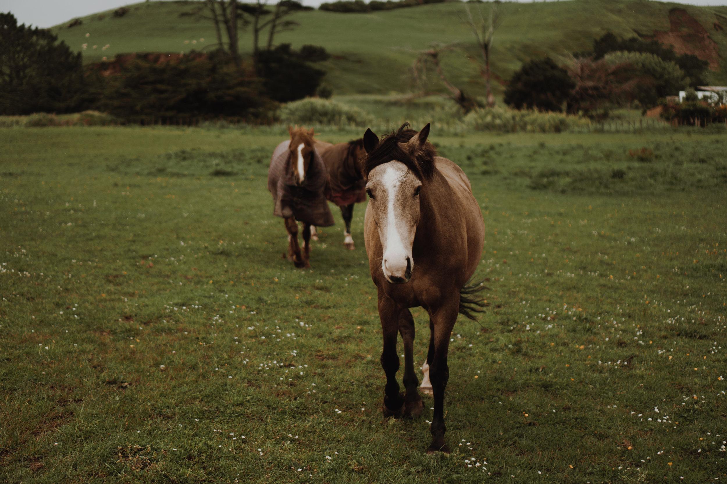 New Zealand- Grace and Jaden Photography (162).jpg