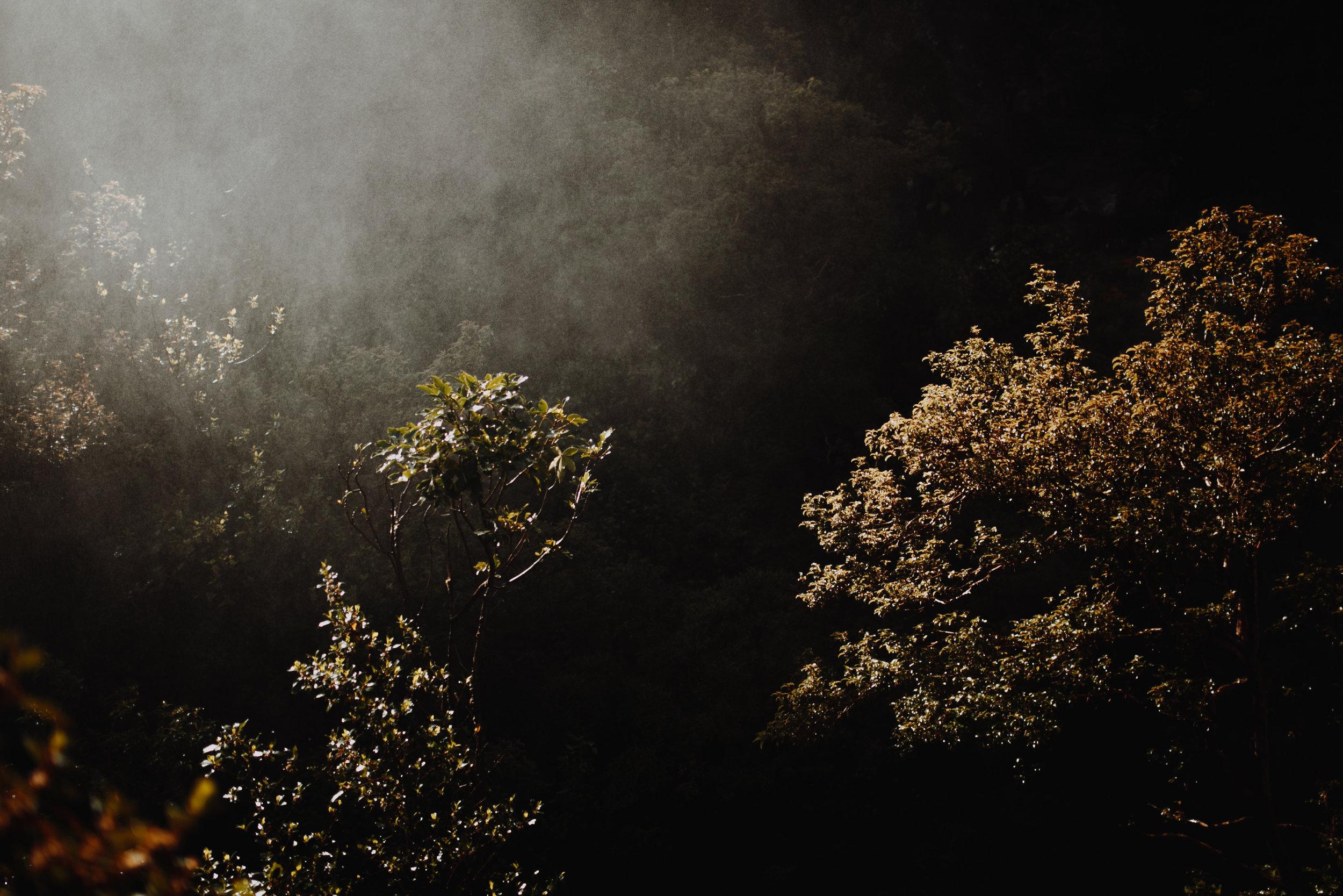 New Zealand- Grace and Jaden Photography (172).jpg